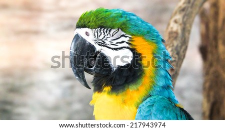 face and body of Macaw bird