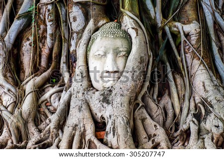face Buddha in the tree 2