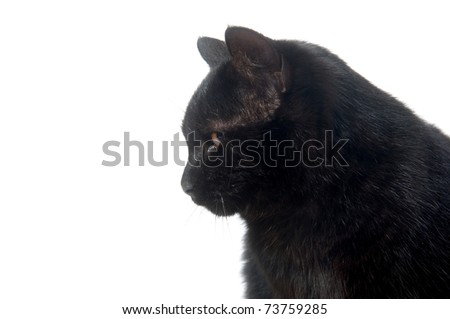 Face of a black cat on white background