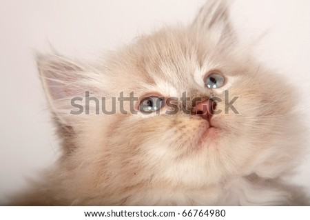 Face of a cute kitten on white background
