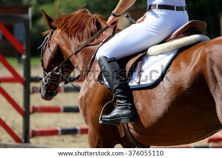 Face of a purebred racehorse with beautiful trappings under saddle  during training - stock photo