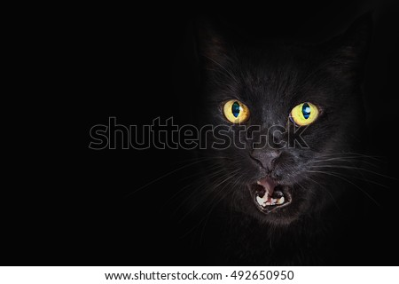 Hiss stock images royalty free images vectors - Scary yellow eyes ...