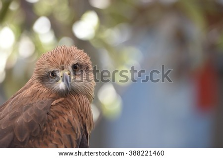 face of an eagle