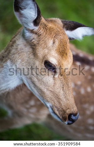 face of bambi deer in close-up - stock photo