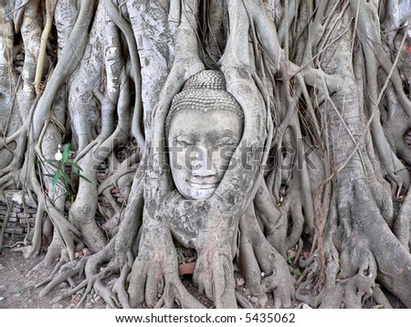 face of budda carved on tree, thailand