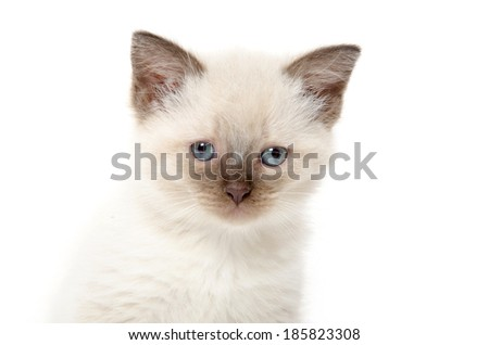 Face of cute baby kitten on white background