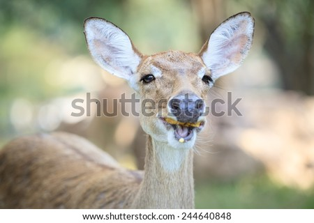 Face of Eldi's deer close up.