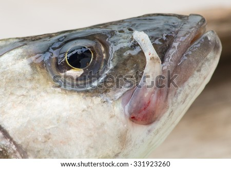 face of fish