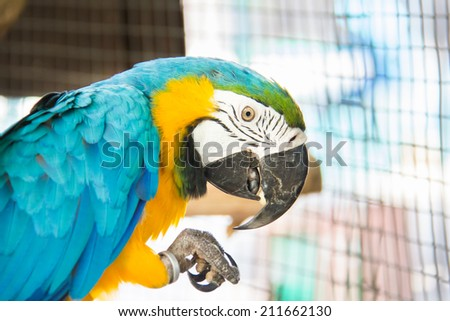 face of Macaw bird in the farm