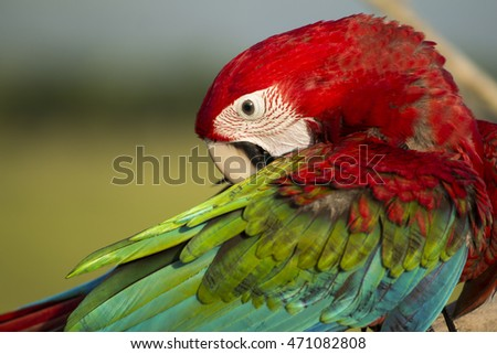 Face of parrot macaw background