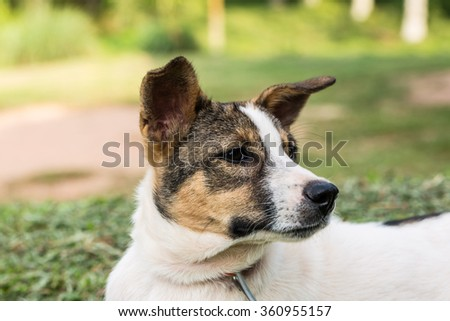 face of the dog on green grass