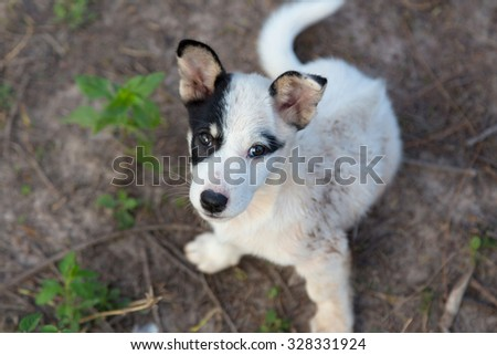 Face white pupies looked my shoot. - stock photo