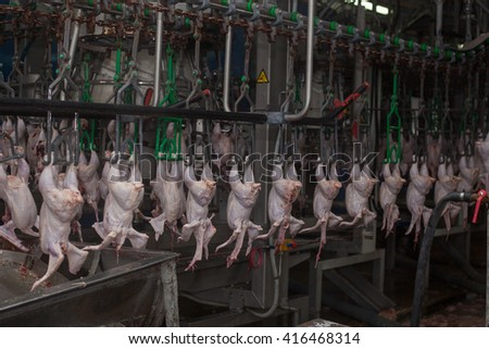 factory for the production of chicken meat. technological process. - stock photo