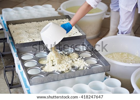 Factory workers fill molds for the production of soft cheese