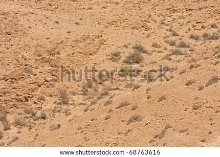 Fade grass on torrid ground of Judean desert. - stock photo