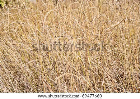 Faded grass - stock photo