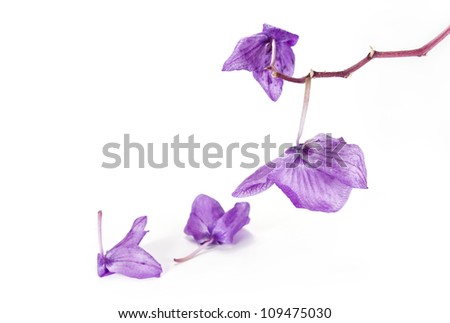 faded orchid - stock photo
