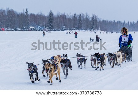 Fairbanks, AK, USA March 9, 2015: A musher races down the Tanana River during the opening hour of the Iditarod dogsled race