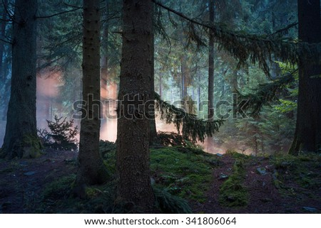 Fairy forest with sunbeams through the branches. - stock photo