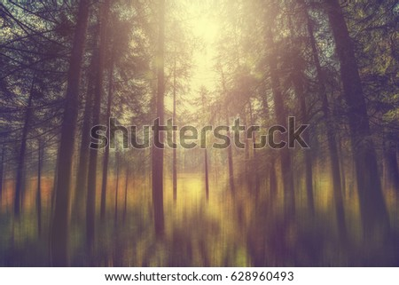 Fairy forest with sunlight