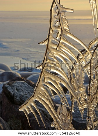 Fairy frozen trees at the sea shore at the sunset