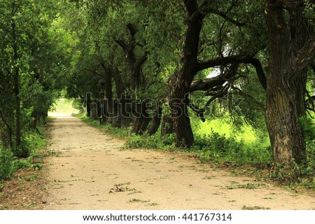 Fairy natural landscape with long earth / sand way under old green branches of trees. Outdoor during summer time - stock photo