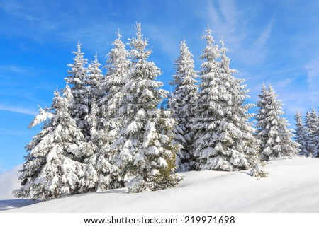 Fairy tale big christmas trees covered with white snow