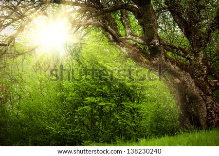 Fairy tale glade with old tree close up - stock photo