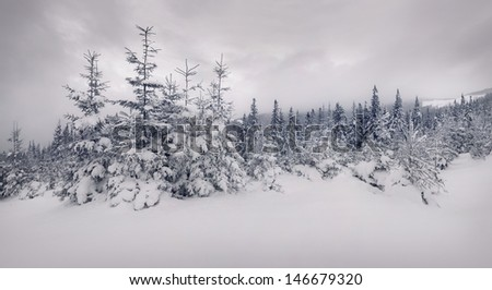 Fairy-tales snowfall in winter forest.