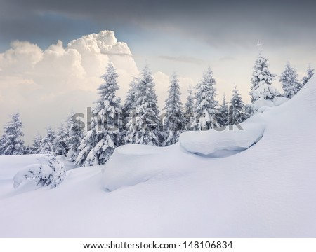 Fairy-tales snowfall in winter forest.  - stock photo