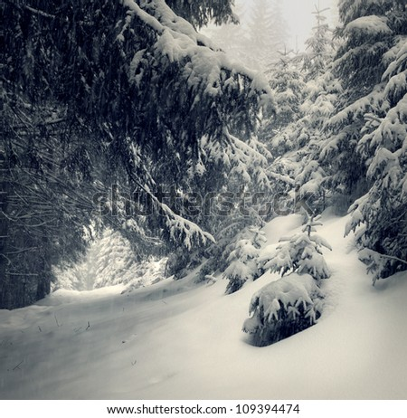 Fairy-tales snowfall in winter forest. Vintage stylized - stock photo