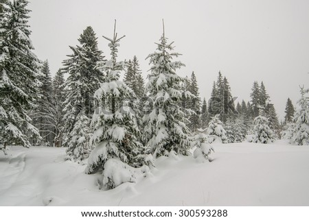 Fairy winter forest with snow-covered fir trees and a beautiful blue sky