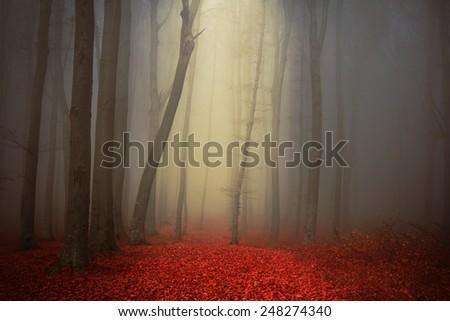Fairytale foggy forest - stock photo