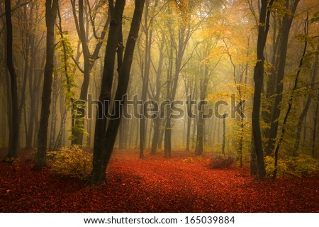 Fairytale foggy forest for child and fantasy books - stock photo