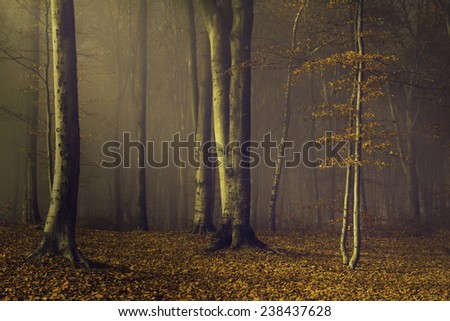 Fairytale foggy forest with light coming through the trees - stock photo