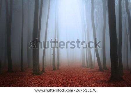 Fairytale forest - stock photo