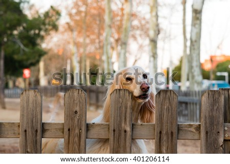 faithful blond dog awaiting its owners return - stock photo