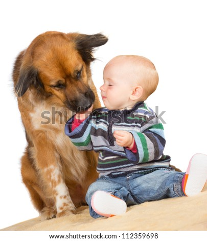 Faithful family dog gently licking the hand of a cute baby as they sit together on the floor with a white background - stock photo