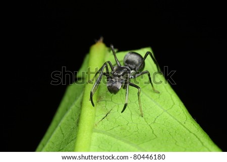 fake ant - stock photo