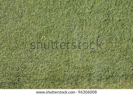 Fake grass wall, texture - stock photo
