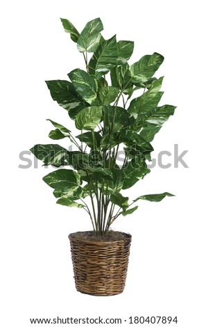 Fake plant in wicker basket