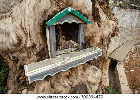 FALAM, MYANMAR - JUNE 18 2015: Shrine inside a tree in Falam in the recently opened to foreigners area of Chin State - western Myanmar (Burma) - stock photo