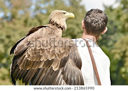 falconer holding Sea Eagle on glove - stock photo
