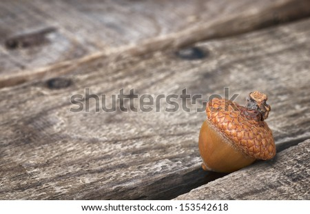 Fall Acorn on Rustic Wood Boards with Copy space for your Holiday or Seasonal Invitation or Announcement - stock photo