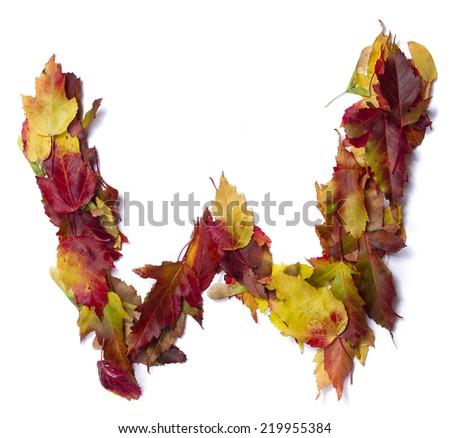 Fall alphabet letter W - stock photo