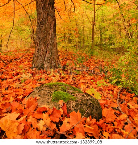 fall autumn forest with rock and vibrant colours - stock photo