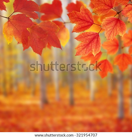 Fall, autumn, leaves background. A tree branch with autumn leaves on a blurred background