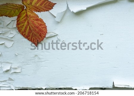 Fall Background.  Fall leaves on a peeling paint background