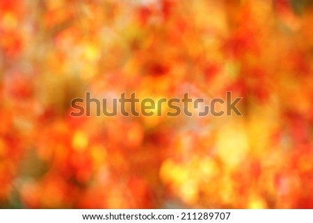 Fall background of autumn leaves in out-of-focus bokeh  Useful for photomontage