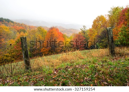 Fall color background - stock photo